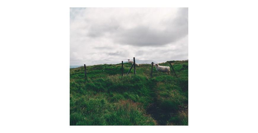 Go green with eco friendly sheepskin